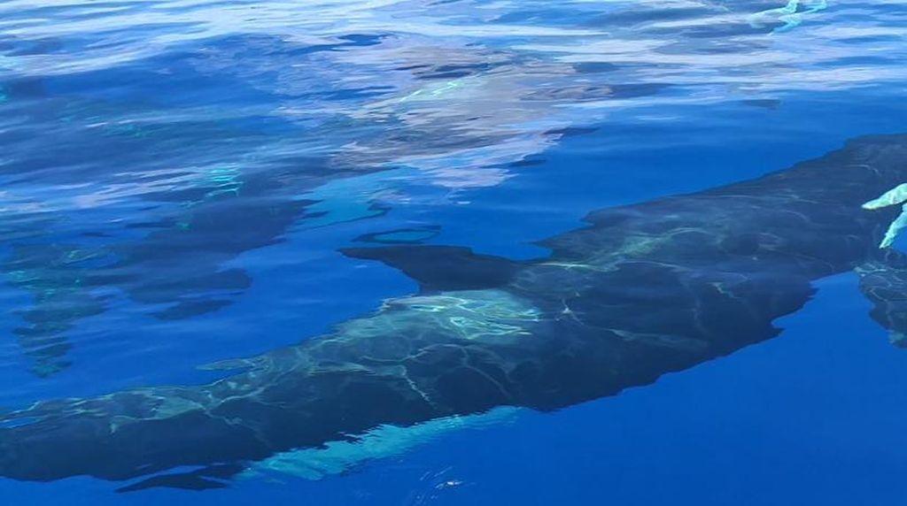 Kemunculan Orca di Perairan Anambas Diduga Pengaruh Iklim Global