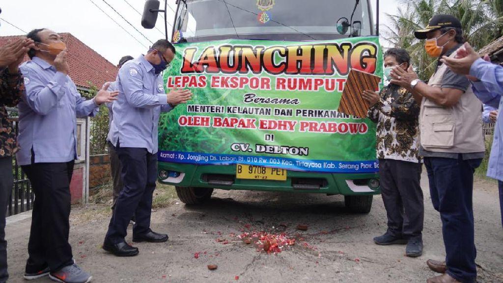 Edhy Prabowo Lepas Ekspor 53,5 Ton Rumput Laut Spinosium ke Vietnam