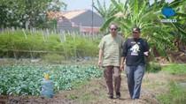 Mantan Buruh Serabutan Berbagi Tips Jadi Petani Sayur yang Sukses