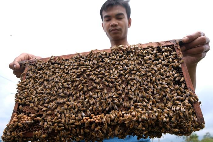 Meningkatnya permintaan madu di tengah pandemi Corona membuat harga madu alami lonjakan. Kenaikan harga madu itu pun bervariasi tergantung jenisnya.