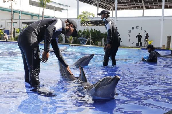 Lumba-lumba ini dilatih selama lokasi ini tutup karena adanya wabah virus corona.