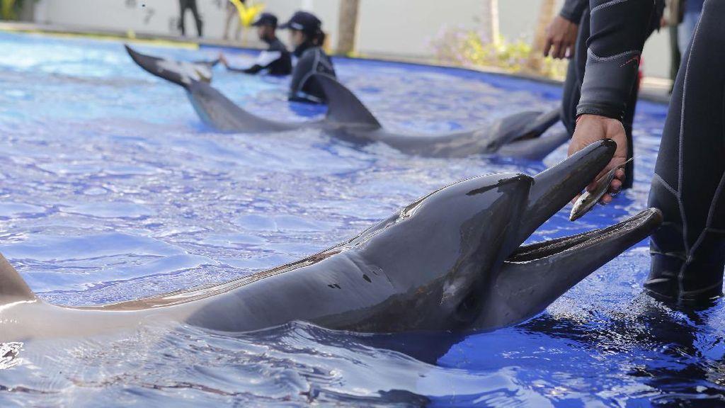Temuan Baru Kecerdasan Lumba-lumba yang Mengejutkan