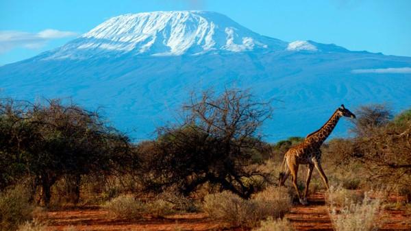 Musim kemarau, antara akhir Juni hingga Oktober adalah waktu yang tepat untuk mendaki Gunung Kilimanjaro. September adalah bulan pendakian utama gunung berketinggian 5.895 meter di atas permukaan laut ini