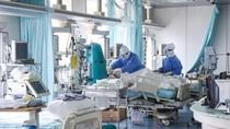 Belanda Laporkan Kasus Penularan COVID-19 dari Cerpelai ke Manusia