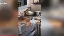 Hi..! Kantin Rumah Sakit di China Dipenuhi Tikus yang Pesta Pora
