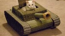 Hilangkan Bosan Isolasi, Pemilik Kucing Buatkan Tank dari Kardus