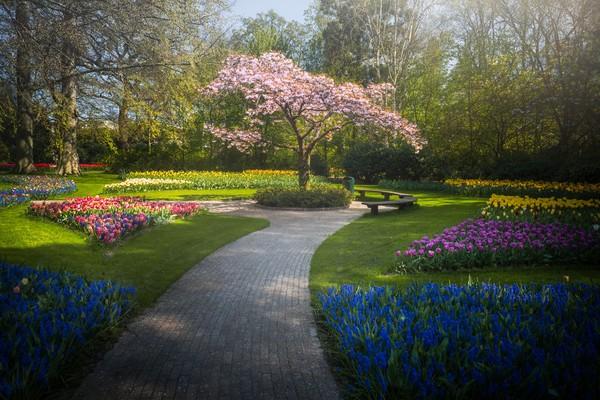 Pohon sakura Jepang yang indah dengan jalan setapak melewati bunga yang mengarah ke sana.