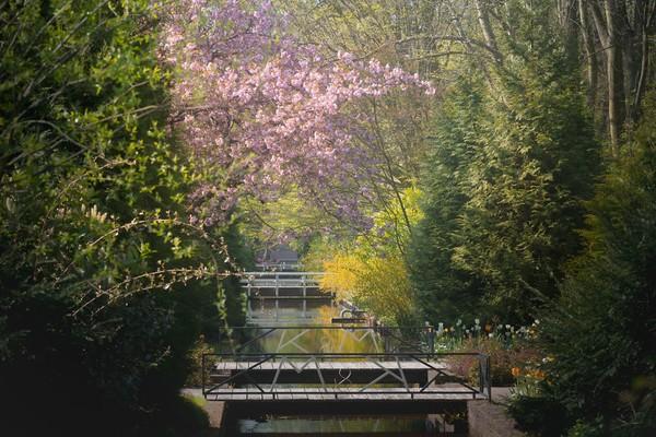Sepanjang jembatan berjalan di taman dengan bunga sakura di atasnya.