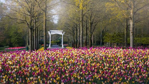 Jembatan putih di dekat pintu masuk taman menunjukkan skala bukit dengan ribuan tulip yang bisa dilihat di depannya.
