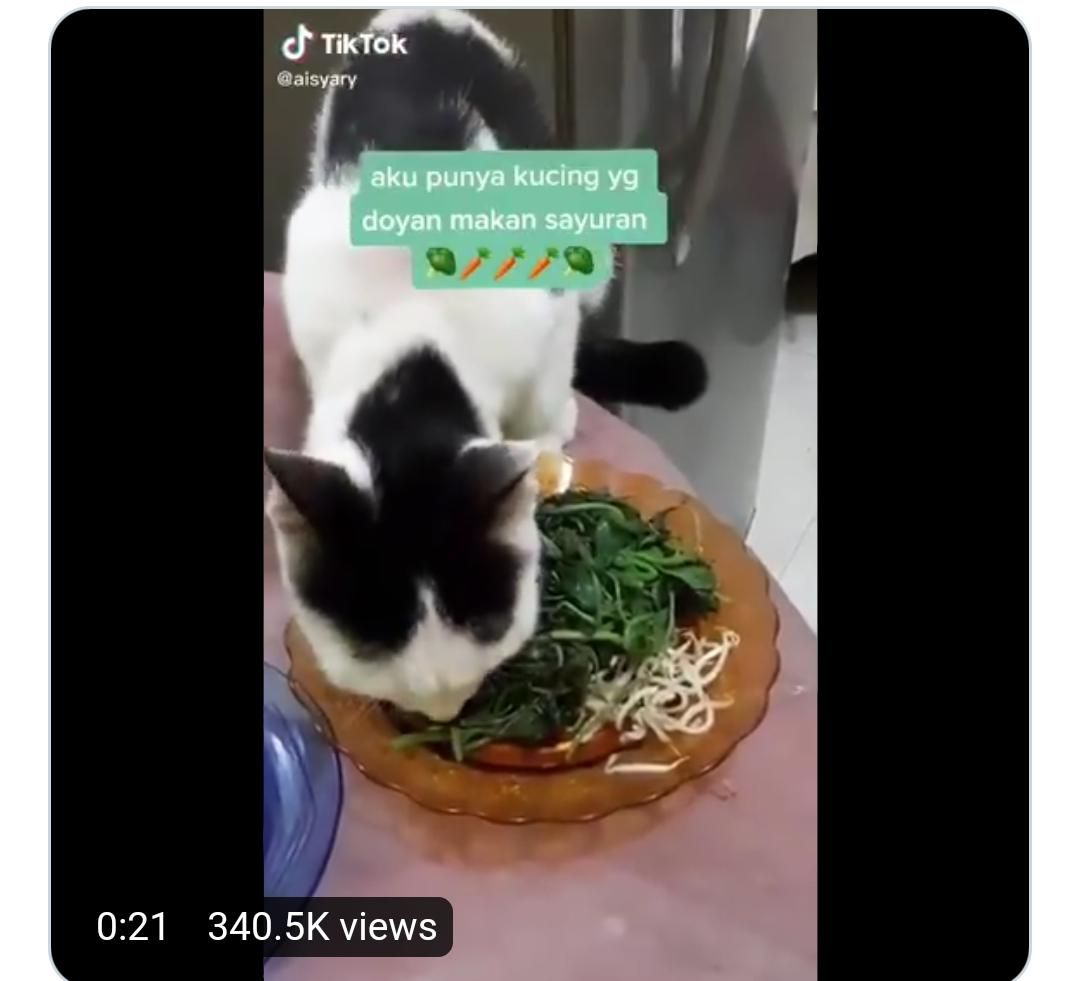 kucing makan sayuran