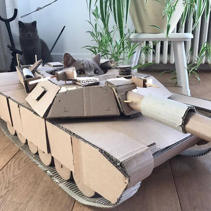 kucing lucu di tank kardus