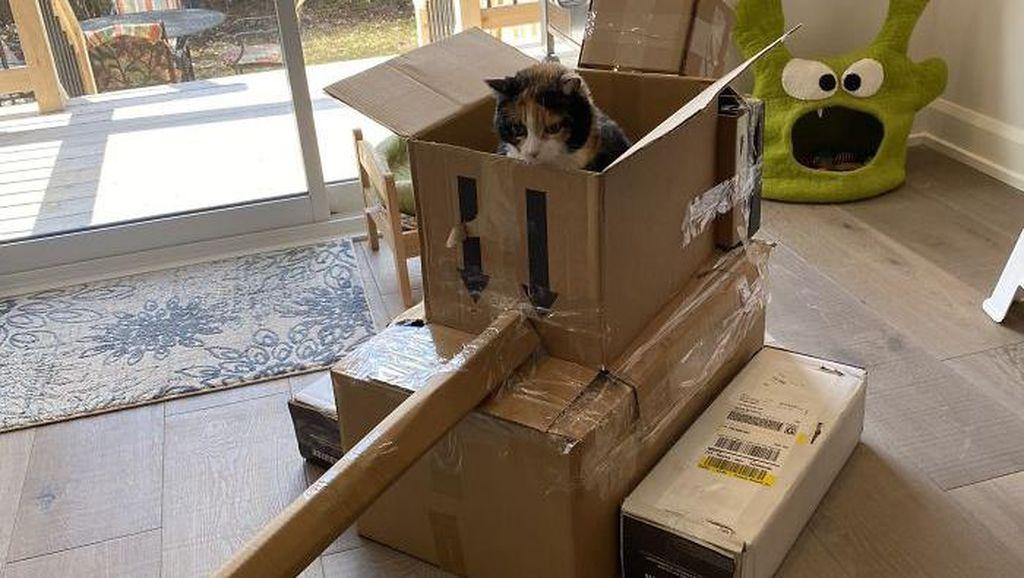 Foto: Ketika Manusia dan Kucing Gabut Saat Karantina