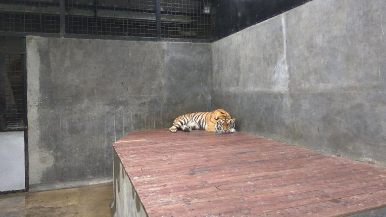 Lembang Park & Zoo di Parongpong, Bandung Barat