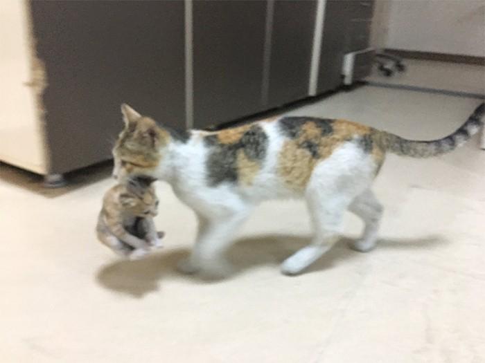 kucing viral