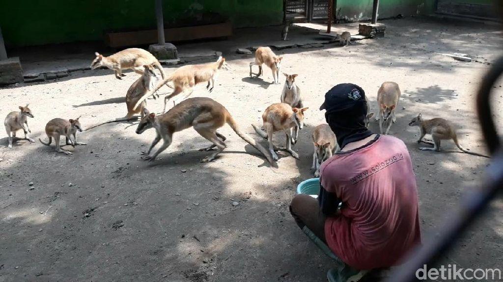 Hanya Mampu Bertahan hingga Juli, Solo Zoo Buka Program Adopsi Satwa