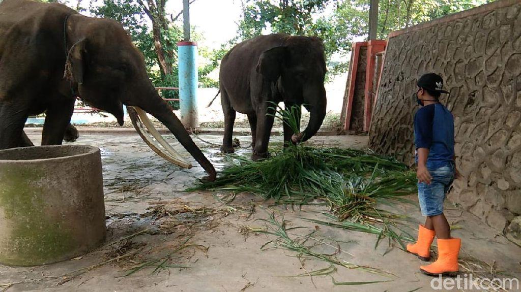 Dana Perawatan Satwa di Semarang Zoo Hanya Cukup untuk 3 Bulan