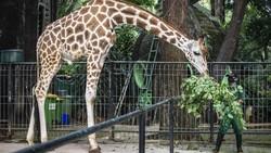 Efek Lockdown, Ada Ledakan Kelahiran Bayi Hewan di Kebun Binatang