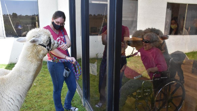 Therapy Alpaca Visit Seniors https://app.asana.com/0/1135954362417873/1173643297146165/f Credit: Helen Woodward Animal Center