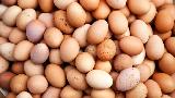 Telur Infertil Beredar, Pemerintah Beri Jaminan Keamanan Konsumen