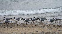 Miris! Sarang Burung Laut di Pulau Tak Berpenghuni Penuh Sampah Plastik