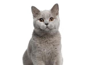 Viral, Penampakan Kocak Kucing Berantem Saat Reporter Lagi Siaran Langsung