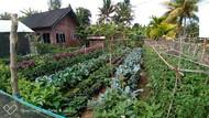 Kementan Dukung Anak Muda Tekuni Urban Farming