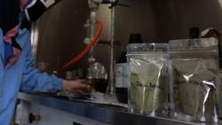 LIPI mengembangkan obat herbal untuk penyembuhan COVID-19. Obat tersebut kini masih dalam proses penelitian dan uji lab.