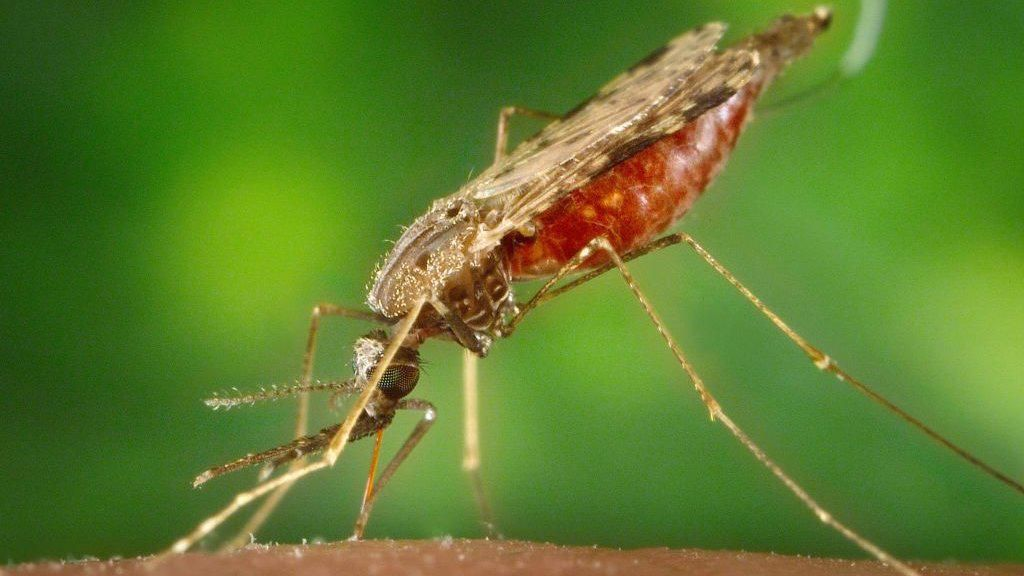 Vaksin Malaria Turunkan Angka Kematian di Afrika