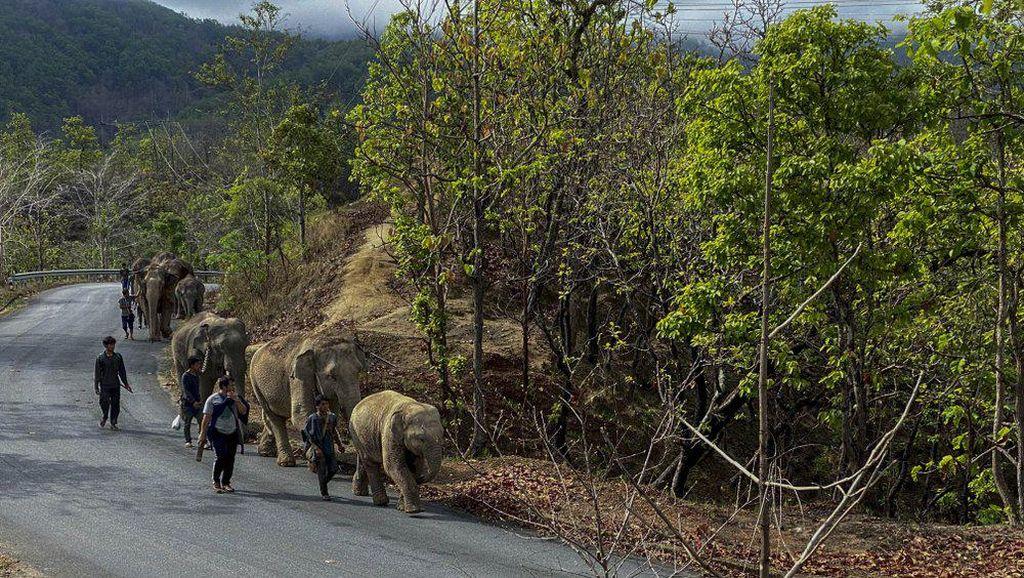 Manakah Negara di Asia Tenggara yang Memiliki Iklim Tropis dan Subtropis? Ini Jawabannya
