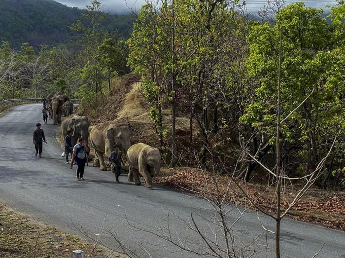 Gajah di Tempat Wisata Thailand Akhirnya Dipulangkan ke Hutan