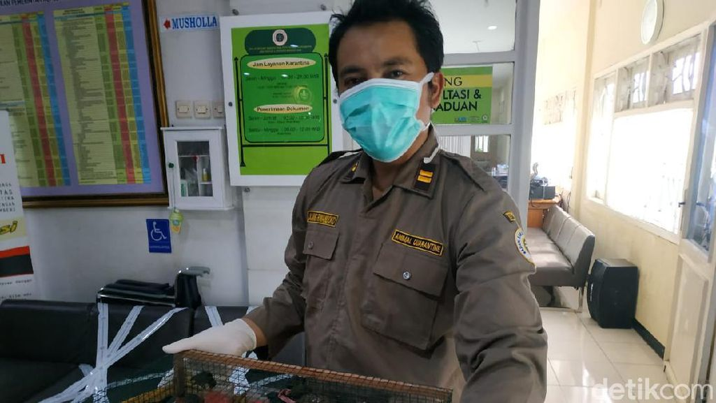 980 Burung Tanpa Dokumen dari Balikpapan Gagal Masuk Surabaya