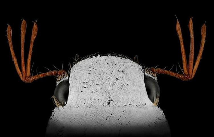 serangga di bawah kamera makro