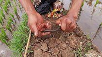 Asyiknya Anak-anak di Sumedang Ngabuburit dengan Memancing Belut
