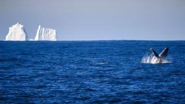 Namun, stasiun-stasiun di Antartika kini mulai membatasi kunjungan wisatawan di awal tahun karena virus mulai menyebar di seluruh dunia. Wilayah itu pun dikunci dan semua kunjungan wisatawan dibatalkan.
