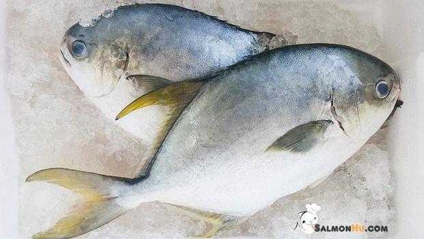 SalmonHu.com