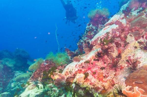 Scuba diving menjadi daya tarik terbesar di Koh Tao karena pemandangan bawah lautnya yang sangat luar biasa indah.