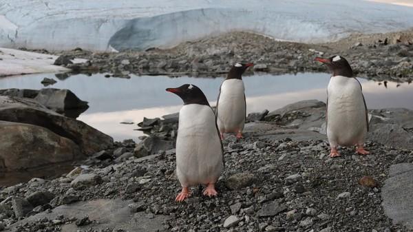 Tidak ada orang asli asli Antartika selain penguin, paus, anjing laut dan elang laut. Sekitar 5.000 orang saat ini ada di Antartika yang sebagian besar berprofesi sebagai ilmuwan dan peneliti.