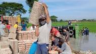 Sopir Ngantuk, Truk Angkut 5 Ton Telur Terguling ke Sawah di Klaten