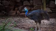 Fauna Indonesia Bagian Timur: Karakteristik dan Contohnya