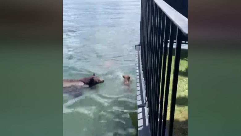 Beruang menyelamatkan anak