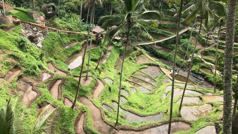 Sistem subak Bali