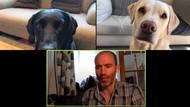 Viral Reporter Olahraga Rapat dengan 2 Anjingnya Via Zoom