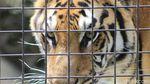 Potret Satwa di Kebun Binatang Bandung Saat Pandemi