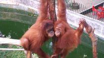 Dampak Covid-19, Menteri LHK: Kelola Kebun Binatang Harus Tahu Satwa