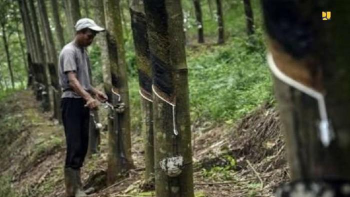 Kementerian PUPR membeli karet bahan baku aspal langsung dari petani