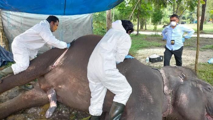 Gajah Febri mati mendadak