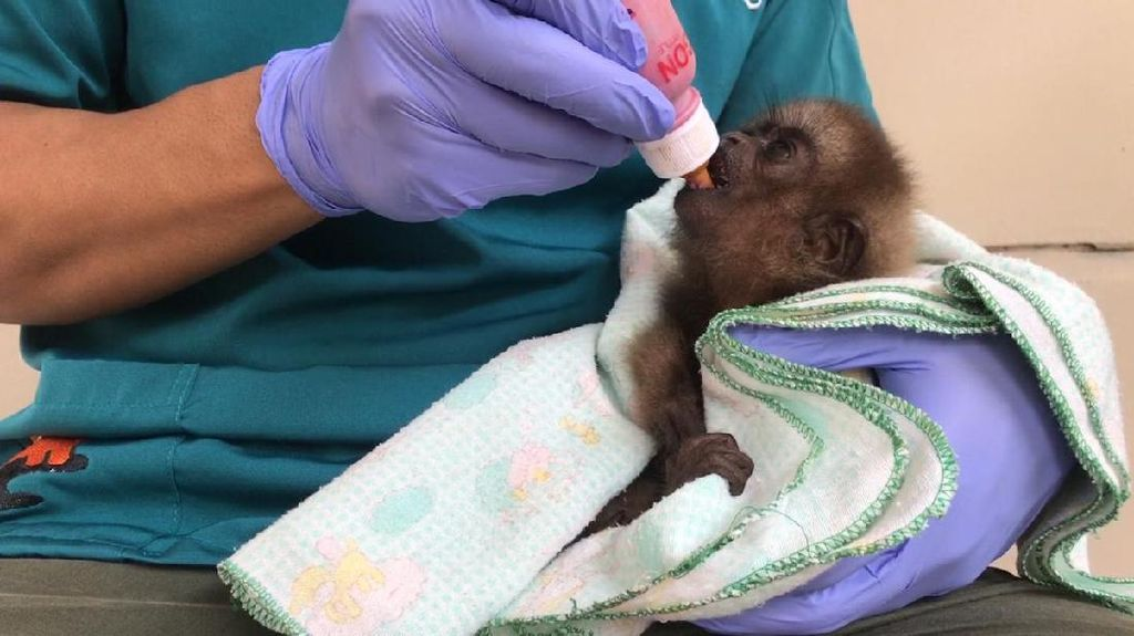 Pandemi Corona, KLHK Pastikan Satwa di Lembaga Konservasi Baik & Sehat