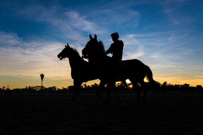 Sejak diberlakukan lockdown, ajang pacuan kuda di Uruguay dihentikan. Namun setelah kondisi disana mulai reda, kuda-kuda ini dilatih untuk siap bermain kembali.