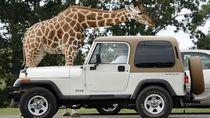 Ternyata, Traveler Suka Pemandangan Safari Buat Jadi Background Zoom