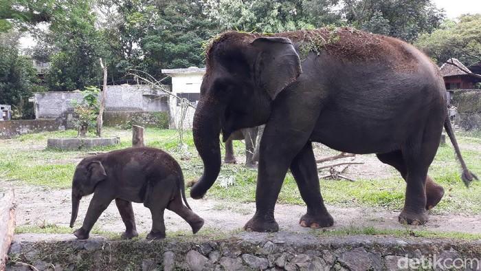 Suasana Gembira Loka (GL) Zoo, Kota Yogyakarta di tengah pandemi Corona, Senin (18/5/2020).